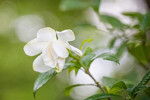 四月能给十二星座带来桃花运的花